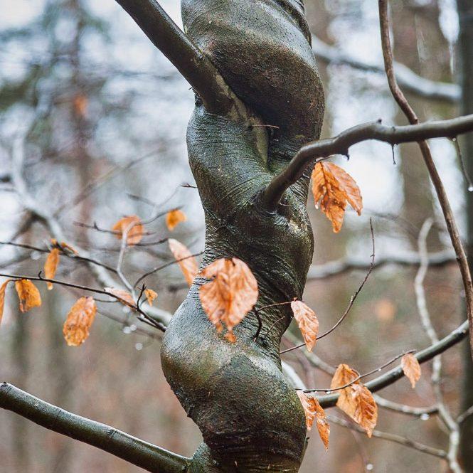 cropped FotoWorkshop Ansitzfotografie mit Globetrotter Akademie 14 von 51 Event Nature